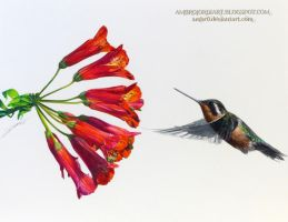 Hummingbird Flower by AmBr0