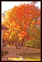 Tree graced with Autumn sunset by TeaPhotography