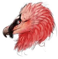 Bearded Vulture by Reviniir