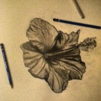 Graphite flower by malloryjohnson15