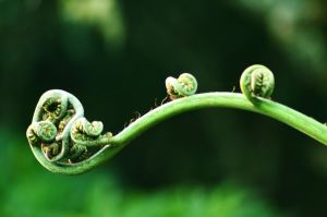 Fern Coil by beetea