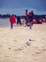 seagull. by wroob
