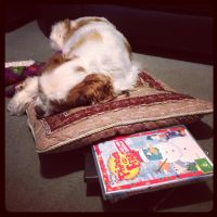 Even dogs like Phineas and Ferb by BrendanR85