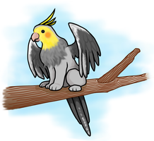 cockaffin on branch by meihua