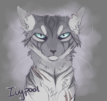 Ivypool sketch by kibaslovelies