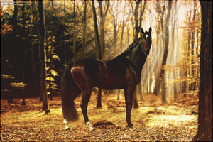 Prince Of The Forest by xxtgxxstock