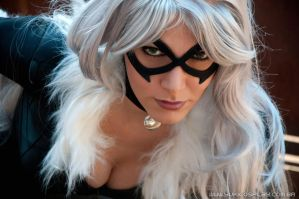 BlackCat - Spiderman Cosplay 4 by Yukilefay