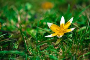 Beauty in the gras 2 by D3PRO