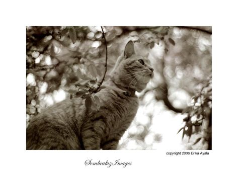 Ginger II by Sombraluz-Images