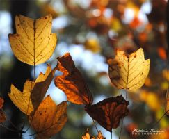 Leaves II by phferreira
