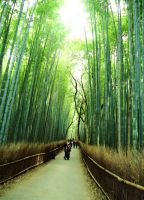 Bamboo in Japan by LiisaFig