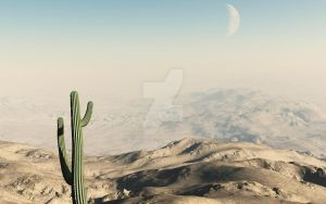 Cactus in the desert by nopor