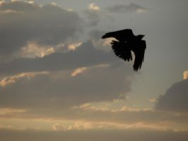 Crow and sunset clouds by Canislupuscorax