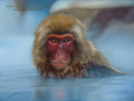 Japanese Macaque by AmBr0