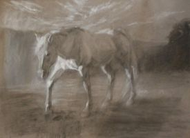 Horse, misty morning by roughin