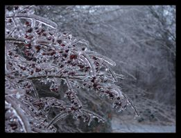 Frozen Burning Bush by St0DaD
