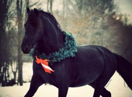 Holiday Friesian by LarissaAllen
