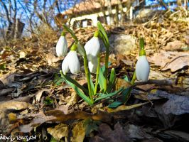 The first signs of spring by ocReaper