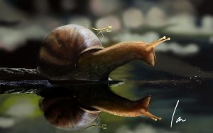 Snail at nature by ianparra