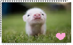 Love 4 Teacup Pigs by KessieLou