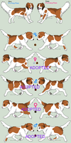 Kooikerhondje Litter - Spinning Round - CLOSED by PoonieFox