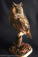 Taxidermy - Long eared owl by Illahie