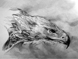 Eagle Sketch by KORSAkorsa