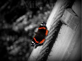 Butterfly by photomik-art