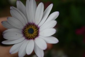Purple and White.. by evalunaofficial