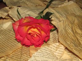 A rose behind each word by Charkitte