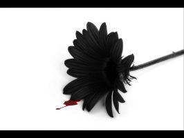 death of a flower.... by knotty82