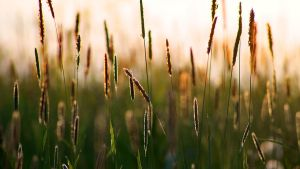 Morning grass 2 wallpaper by weirdfish2