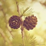 larch by xmagdax