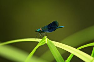Dragonfly 2 by Csipesz