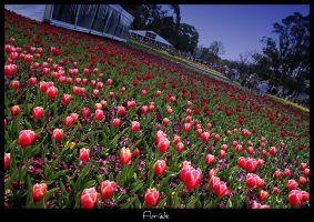 Floriade 2006 by Eman333