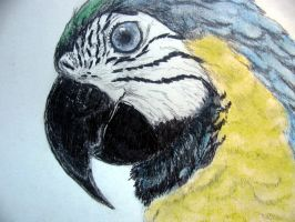 parrot by chrisravensar