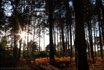 The Forest Floor by Alannah-Hawker