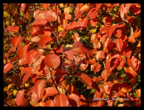red leafs by Black-Day