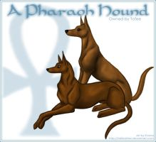 Pharaoh hound template -update by tailfeather