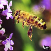 Flying bee by PythonIt