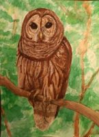 Owl Painting by Meorow