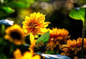 Summer flowers by yongle