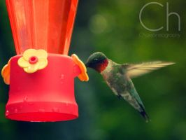 Hummingbird 2 by Champineography