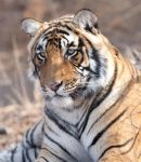 Tiger, Ranthambore, India by KenClacher