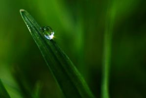 Morning Dew by aliawais