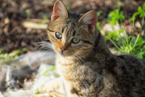 The cat in the garden by hiram67