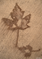 Cave Painting - Leaves by OneofakindKnight
