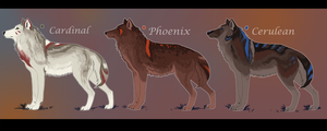 Wolf Adoptables -CLOSED- by Daesiy