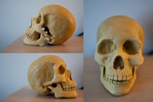 Skull Sculpt by AquilaChrysaetos