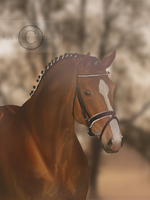 Hello Little Man by RvS-RiverineStables